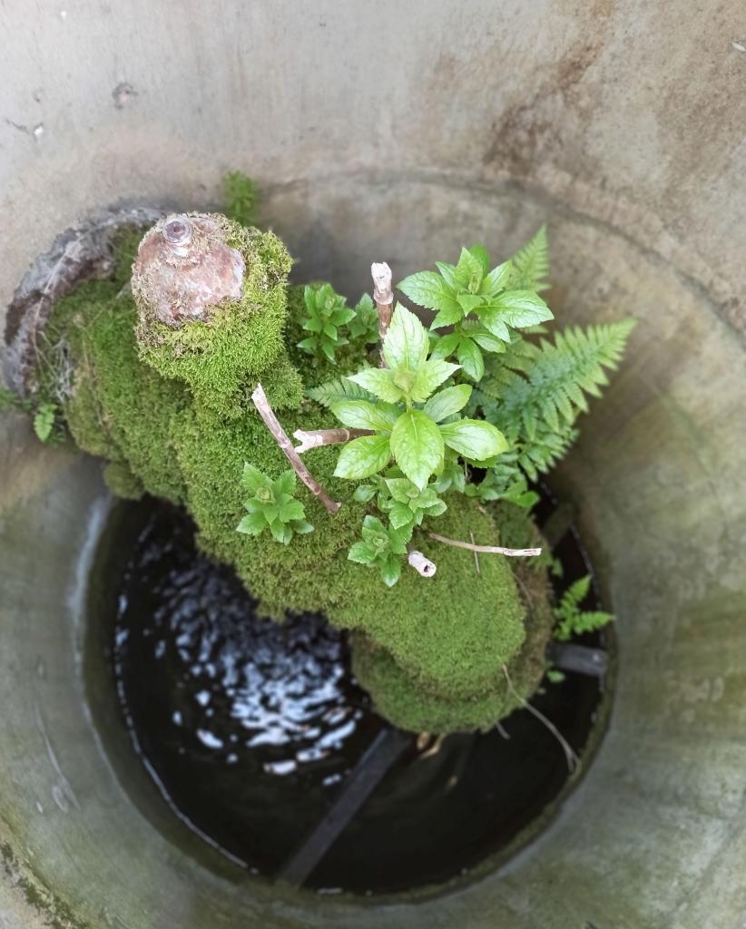 Zdjęcie jednego zlaureatów konkursu fotograficznego przedstawiające kran obrośnięty zielonymi roślinami wodnymi umiejscowiony wstudni
